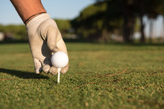 Close up of golf players hand placing ball on tee Royalty Free Stock Photography