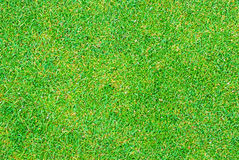 Close up of golf putting grass Stock Photo