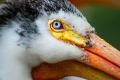 Close up Goose Royalty Free Stock Photos