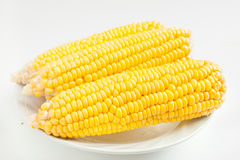 Close up grains of ripe corn Royalty Free Stock Image