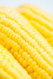 Close up grains of ripe corn Royalty Free Stock Photography