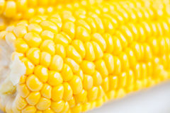 Close up grains of ripe corn Royalty Free Stock Images