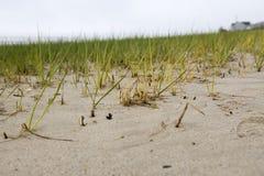 Close up gramíneo da costa durante a maré baixa Imagem de Stock Royalty Free