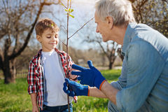 Close up of grandad and grandkid setting fruit tree. Teaching process. Two male family member taking care of nature by gardening together in a country house yard Stock Image