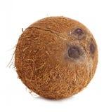 Close-up grande do coco isolado no fundo branco Imagem de Stock
