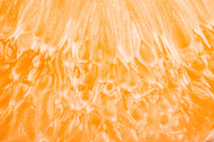 Close up of grapefruit or orange texture pulp Royalty Free Stock Image