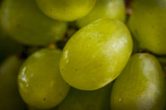 Close-up of grapes. Closeup of green grape on grape bunch Stock Photography