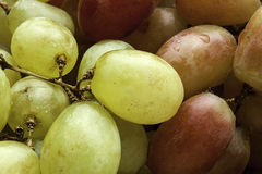 Close up grapes. Stock Image