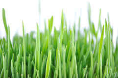 Close-up of grass Stock Image