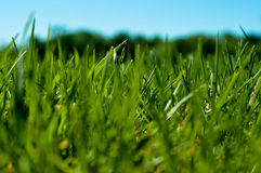 Close-up grass Royalty Free Stock Photos
