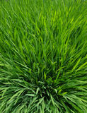 Close up grass Stock Photos
