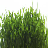Close up of grass. Studio close up of grass blades royalty free stock images