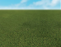 Close up of grass. Grass with bright blue sky Royalty Free Stock Photo