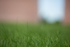 Close up of grass Stock Images