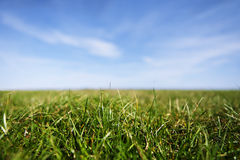 Close-up of grass blades. Blue sky is blurred in background stock image