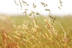 Close up of grass blowing in the wind Stock Photos