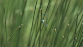 Close up of grass with dragonfly stock footage