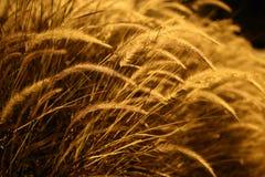 Close Up, Grass Family, Macro Photography, Grain stock photos