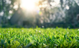 Close up of grass field Royalty Free Stock Images