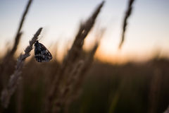 Close up of grass field flowers at sunset light. colorful nature background with butterfly Royalty Free Stock Photo
