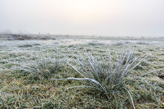 Close up of grass with hoar frost on a winter day Stock Photo