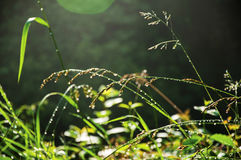 Close-up of grass in the morning Stock Photos