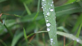 Close up of grass with rain drops macro. HD. stock footage