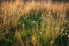 Close up grass and straw. Summer blossom field abstract background stock photography