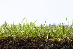 Close up of grass strip Royalty Free Stock Image