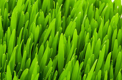 Close up of  grass on summer day Stock Photo