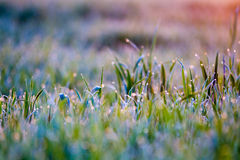 Close up of grass royalty free stock images