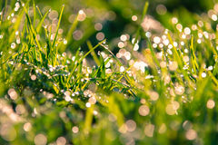 Close up of grass stock photography