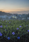 Close up of grass with violet flowers against beautiful sunrise   and city landscape Stock Photos