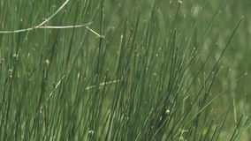 Close up of grass stock video