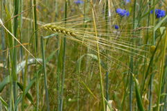 Close up of grasses in field Royalty Free Stock Images