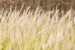 Close-up of grasses. It is the close-up shot of grasses royalty free stock image