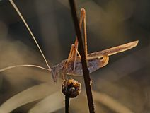 Close up of grasshopper stock photo