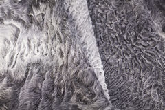 Close up gray fur sheep pattern Stock Images