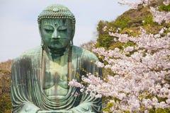 Close up great buddha with sakura foreground Royalty Free Stock Photography