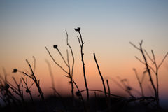 Close up of a greek plant at sunset Stock Photography