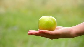 Close-up of a green Apple lying on the female hand. Girl holding an Apple in the orchard. stock video