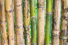 Close up green bamboo fence Royalty Free Stock Image