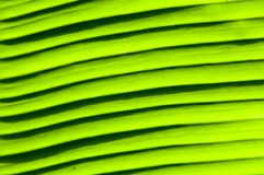 Close-up on Green banan leaf Royalty Free Stock Photo