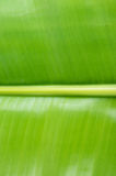 Close up green banana leaf background texture Royalty Free Stock Photography