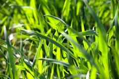 Close up of green blades of grass Stock Photos