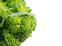 Close up of green broccoli texture background. Broccoli isolated on white background Royalty Free Stock Photos