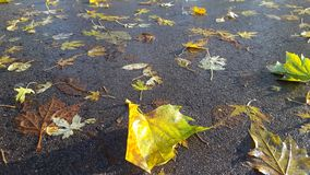 Autumn leaves on wet ground Stock Images