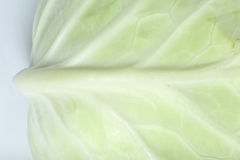 Close up Green cabbage Stock Photography