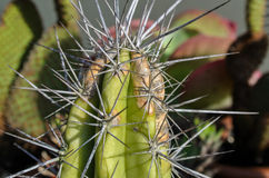 Close Up of a Green Cactus Stock Photo