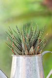 Close up green cactus in the vintage potted. Stock Image